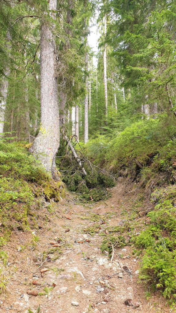 Ein umgestürzter Baum versperrt uns mal wieder den Weg