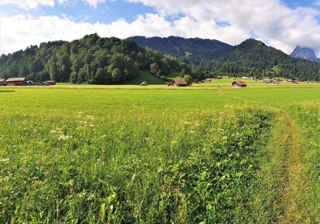 Wiese bei Garmisch