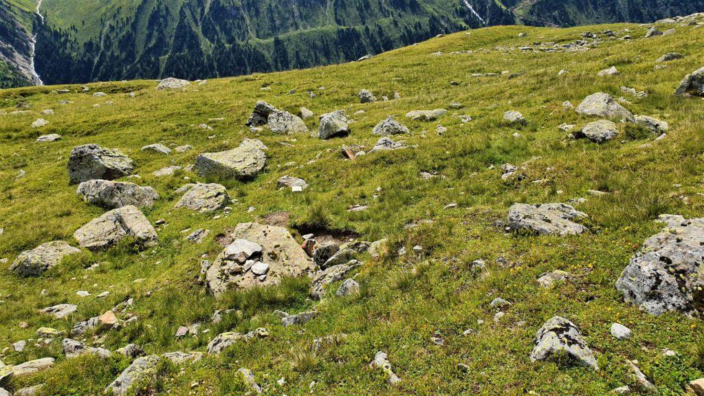 Murmeltier zwischen Steinen